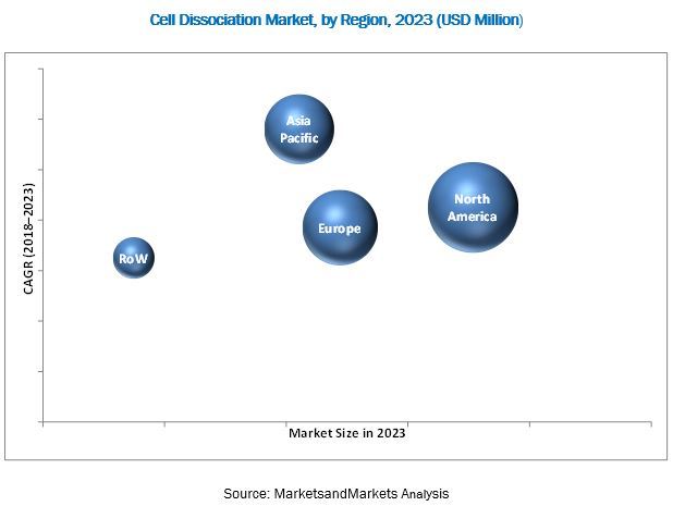 Cell Dissociation Market