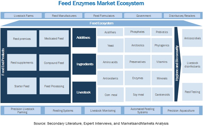 Feed Enzymes Market Ecosystem