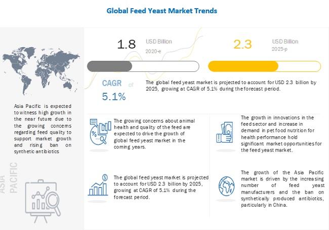 Feed Yeast Market