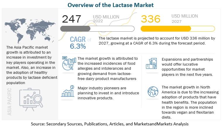 Lactase Market