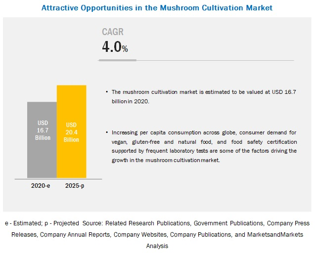 Mushroom Cultivation Market