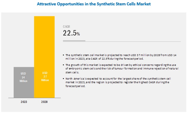 Synthetic Stem Cells Market By 2028 | MarketsandMarkets